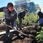 Жители Норильска засеяли 27 500 кв.м. многолетней травой